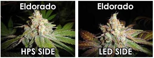 led vs hps grown bud